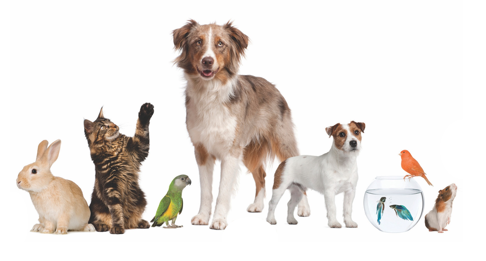 Small Animals for Pets List Bring you smile! Huisdieren