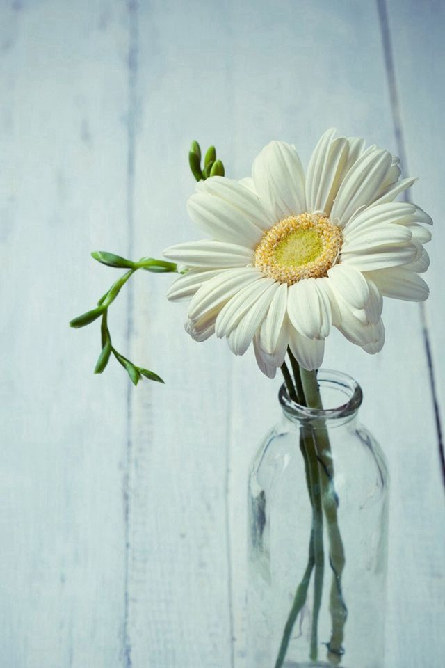 Aesthetic Beautiful Daisy Vase iPhone 4s wallpaper