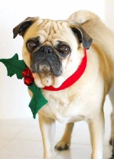 Pet Ownership Provides Many General Benefits To Human Health Those That Especially Relate Christmas Dog Collar Diy Christmas Dog Collar Christmas Dog Outfits