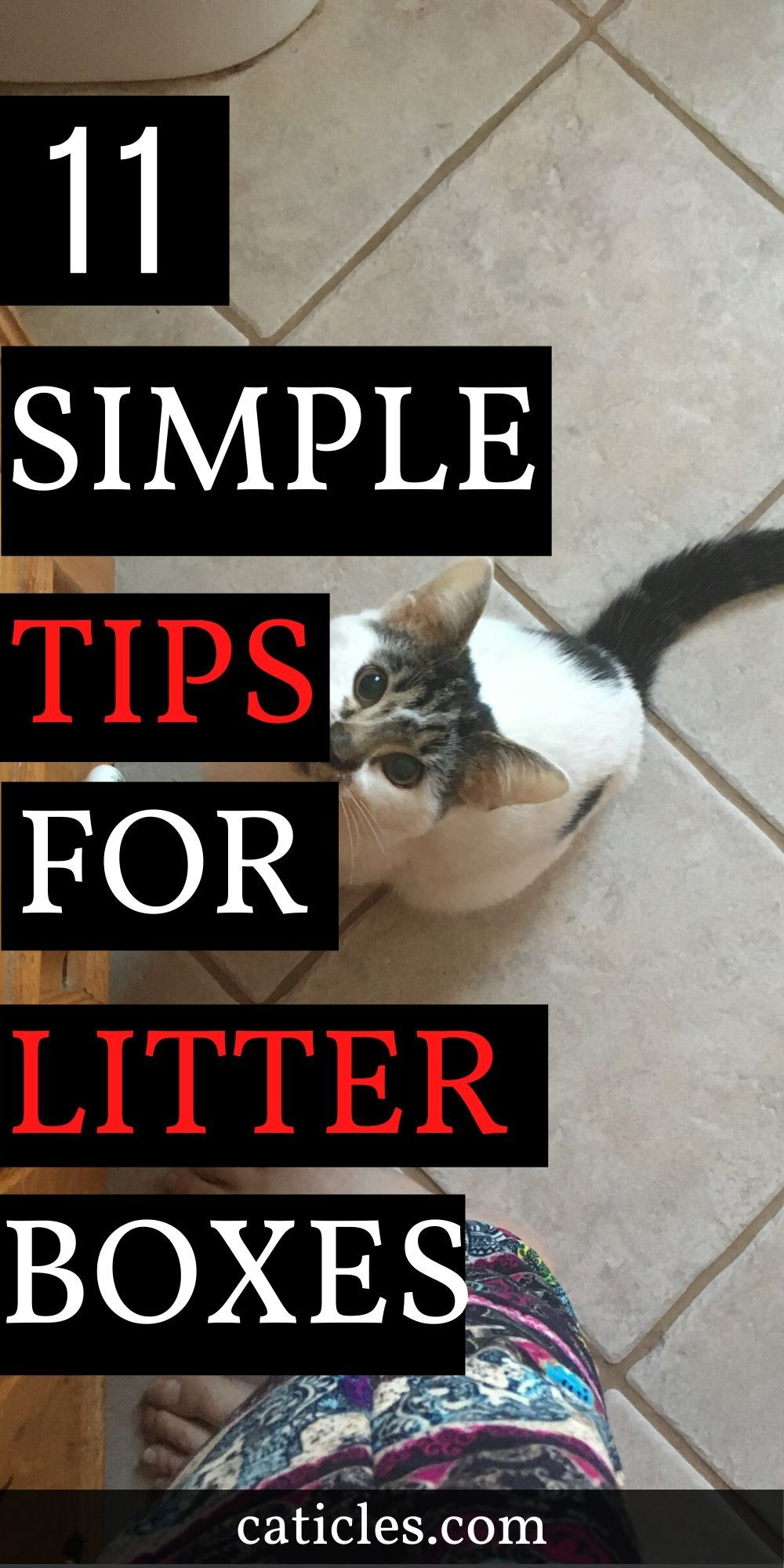 How to Keep Litter Box Area Clean 11 Hacks Every Cat