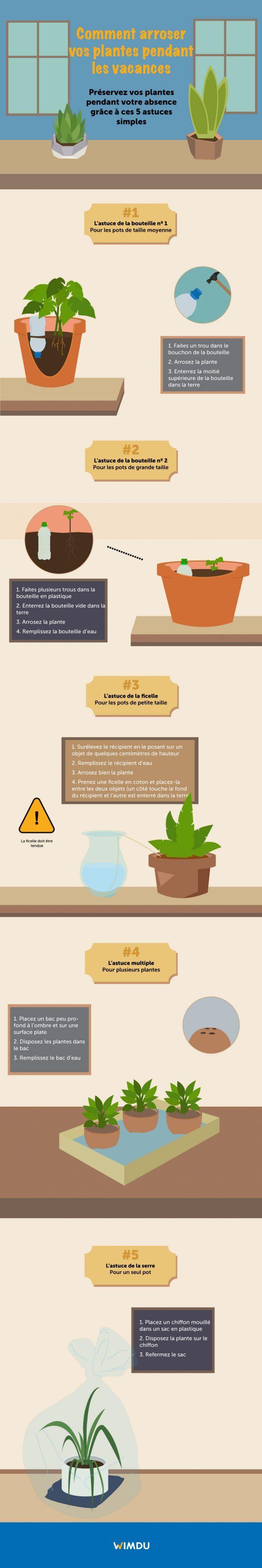Plantes Arroser Plante Plante