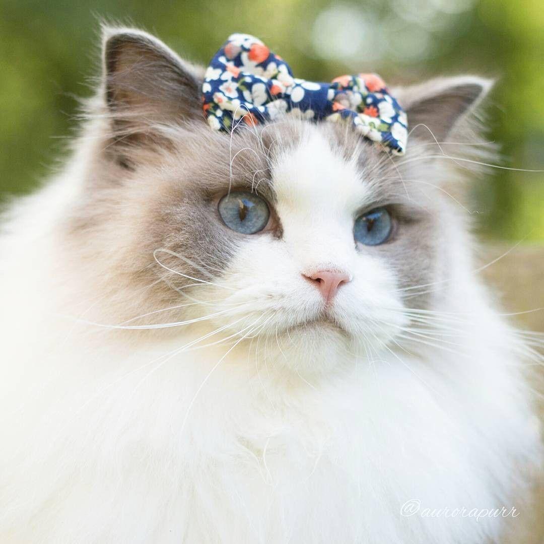 очень красивые коты мира фото втором классе был
