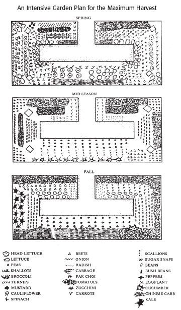 Shade Vegetable Garden Design Layout