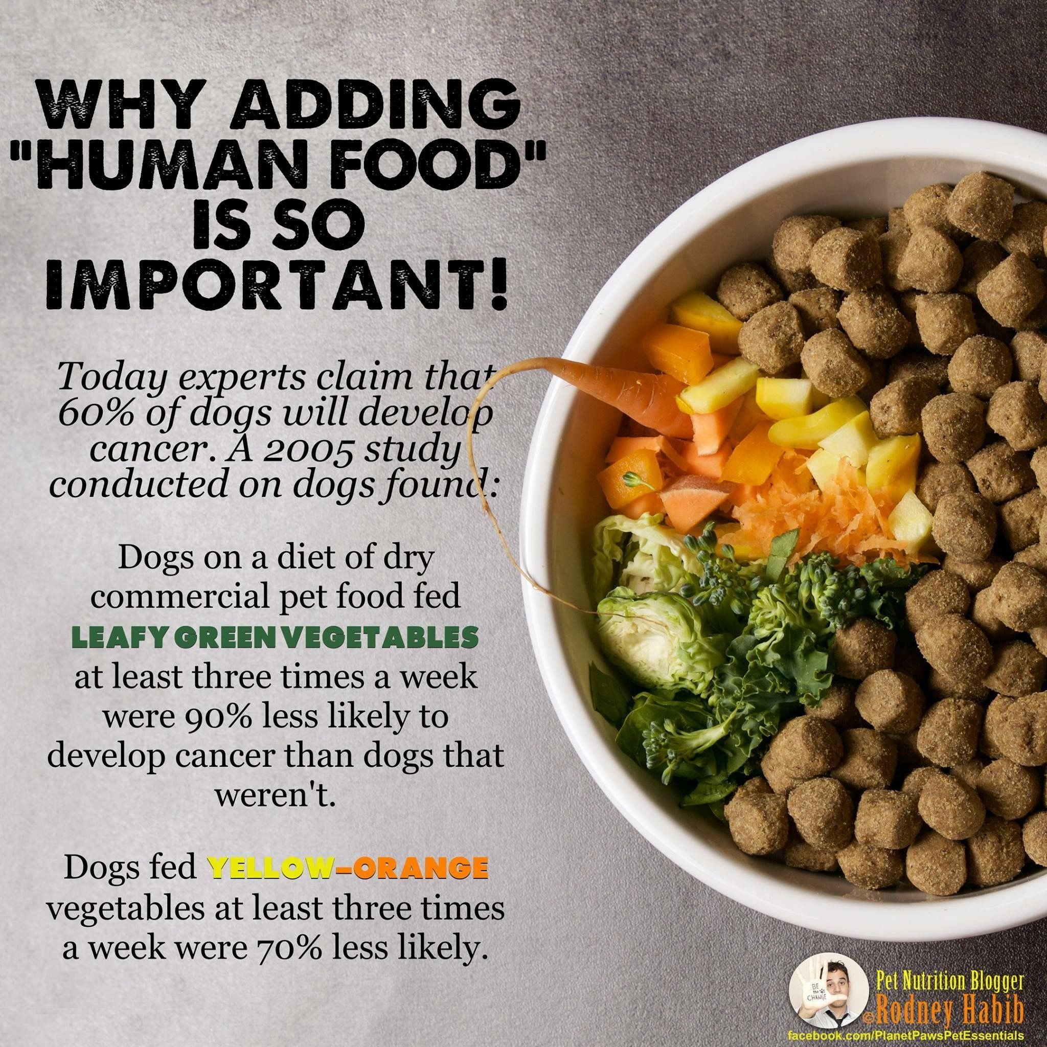 To Help Avoid Cancer Feed Your Dog Greens Yellow Orange