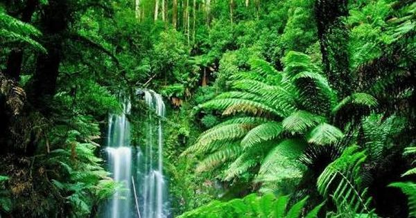 Image result for high resolution rainforest pictures