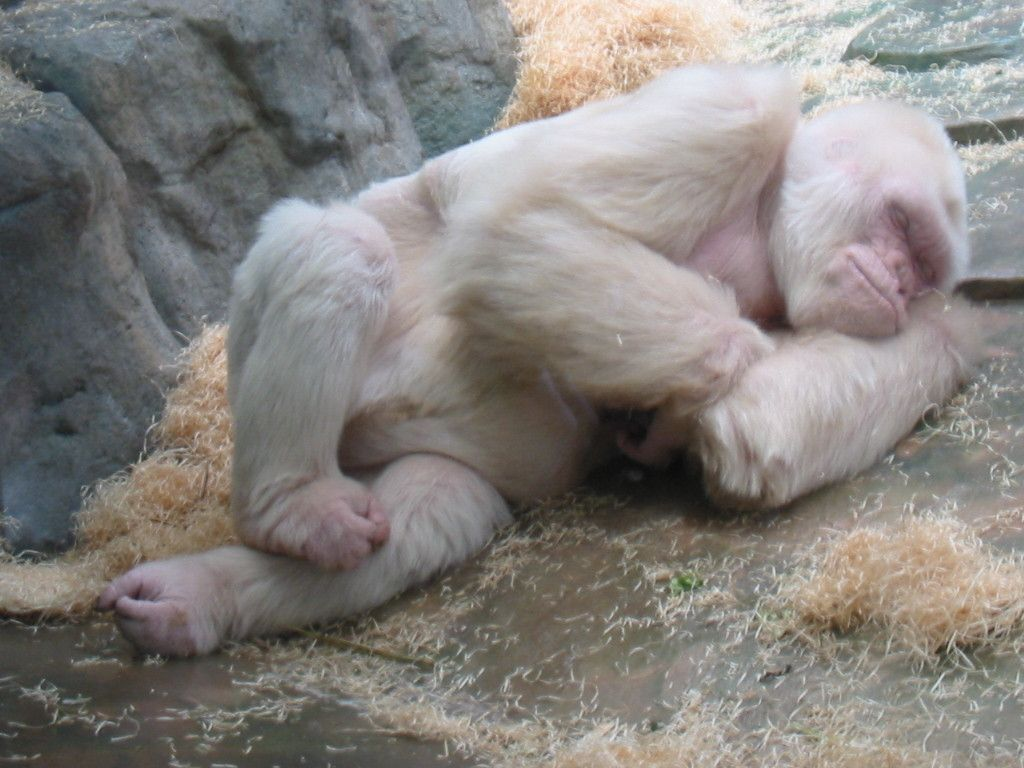 16 Rare Albino Animals That Don't Need Color To Look Beautiful,  #Albino #albinoanimalmelanis... #albinoanimals