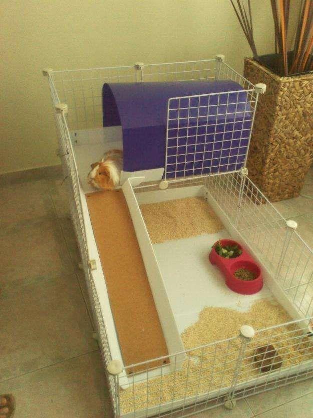Conejos enanos conejitos enanos accesorios todo conejos - Casas para conejos enanos ...