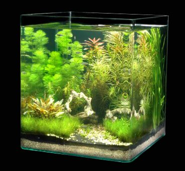 Nano aquarium f r die k che aquaria aquascapes for Nano cube fish tank
