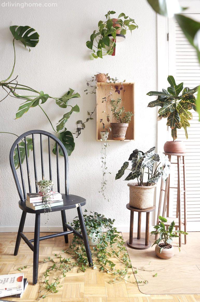 1 plantas, 3 estilismos, ¿cuál te gusta más? | Dr. Livinghome. Decoración con (tu) estilo. Decoración diy que no parece diy