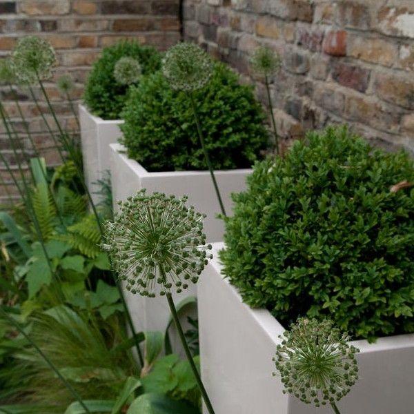 Pin de BettyLou Stella en Outdoor Pinterest Jardines, Huerta y - diseo de jardines urbanos