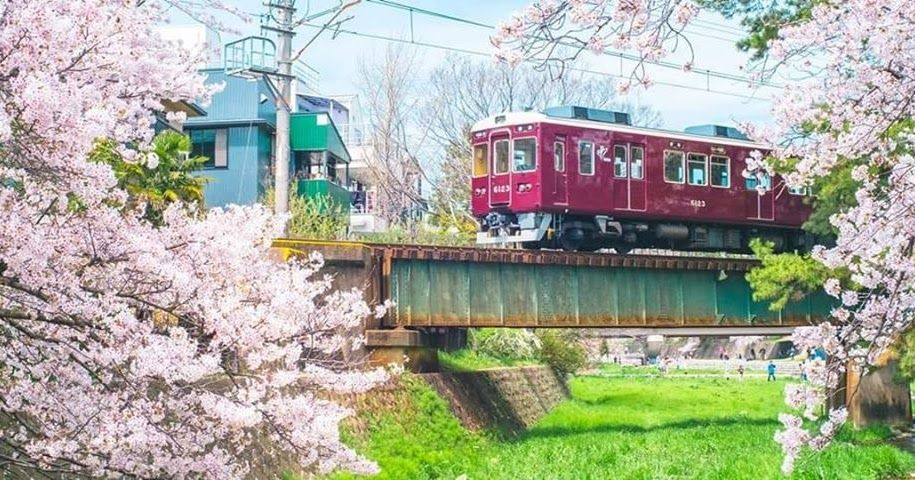 قطارات تنبح كالكلاب للغزلان نصيب في سياسة القطارات اليابانية إذ تسير الغزلان عادة على مسارات القطار للعق العشب القريب للغاية من مسا House Styles Japan Cabin