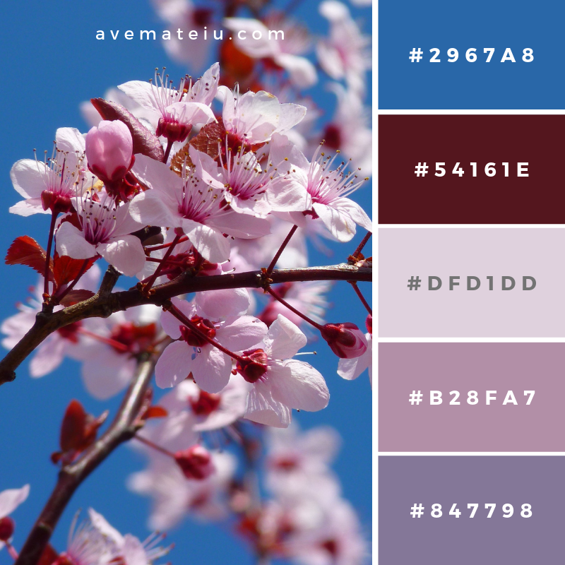 Photo of Cherry Blossom Color Palette #185 – Ave Mateiu images