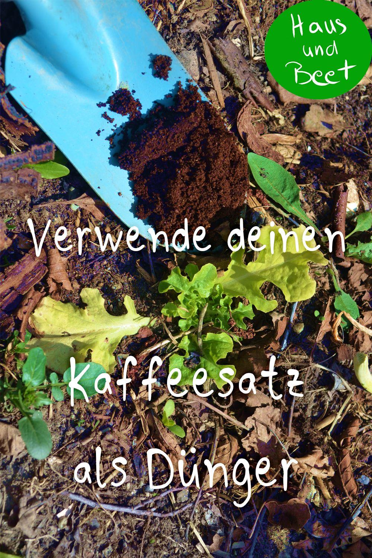 Kaffeesatz Als Dunger Wirf Ihn Nicht Weg Mit Bildern Pflanzen Kaffeesatz Garten Anlegen