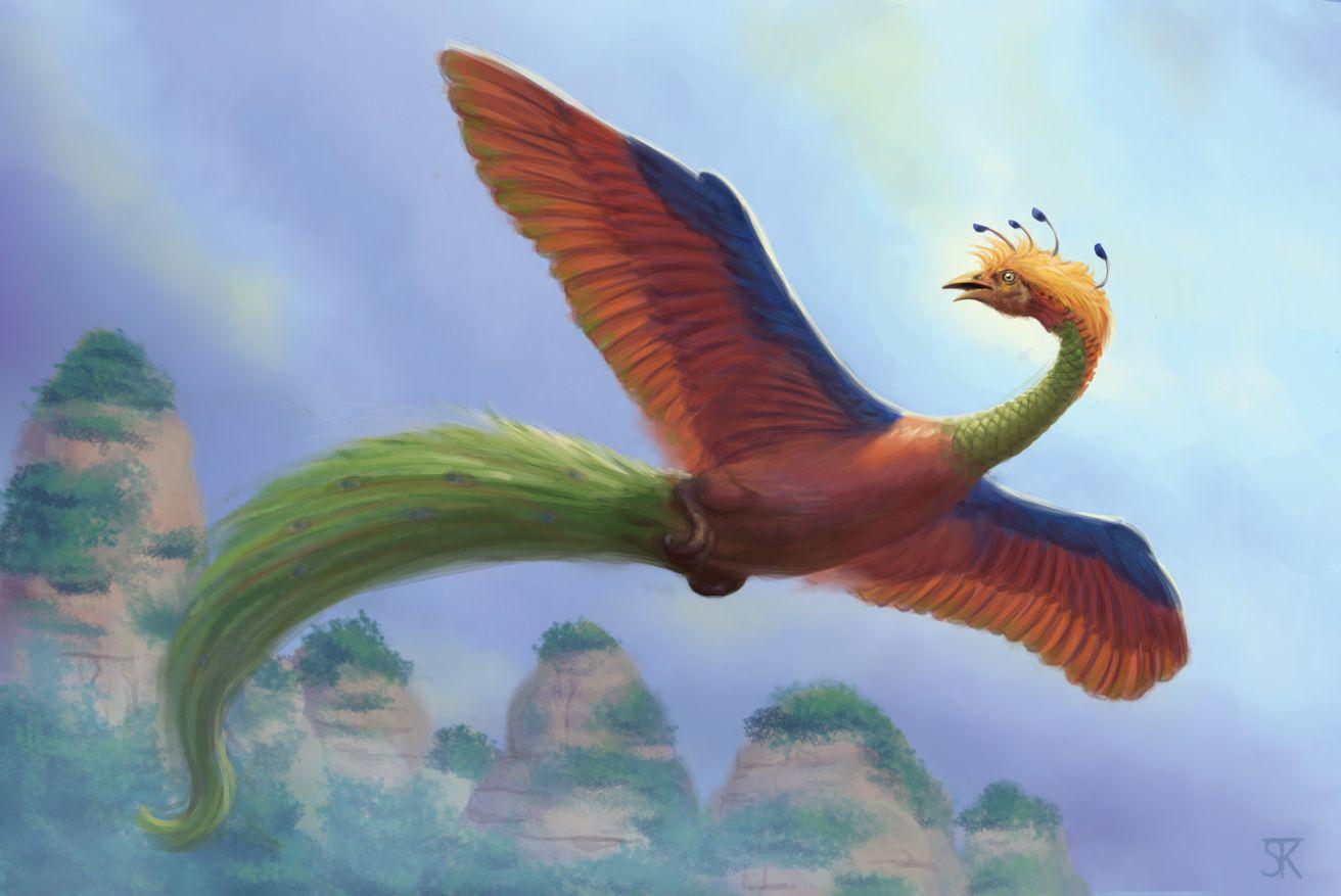 """Résultat de recherche d'images pour """"huma bird"""""""