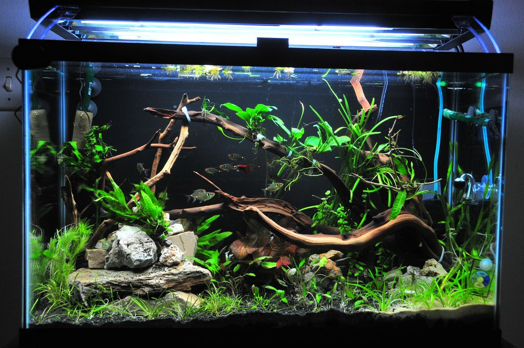 29 Gallon Freshwater Aquarium Setup Google Search