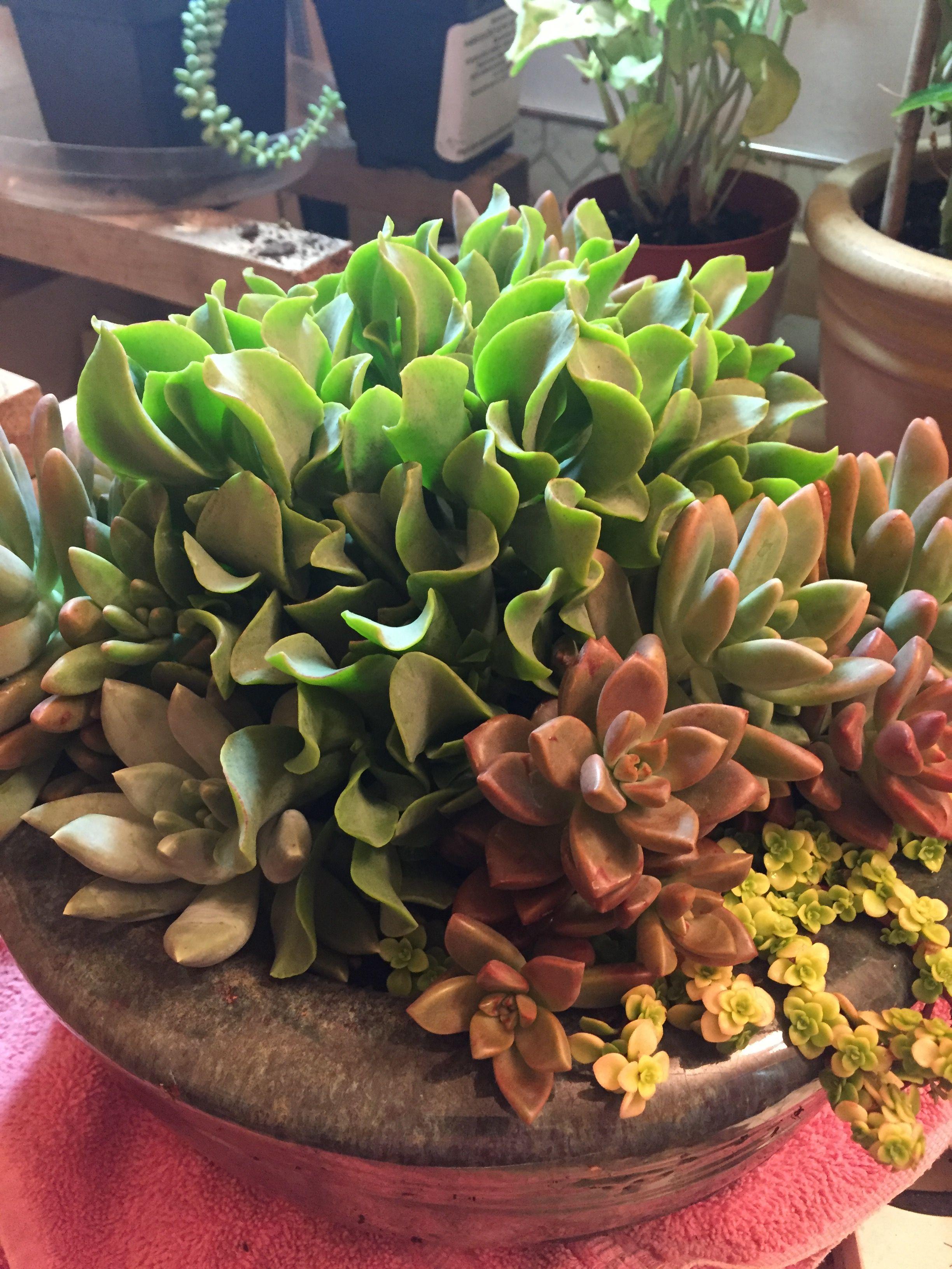 2017 Succulent Containers Container Gardening Arrangements Autumn Garden Flower Pots