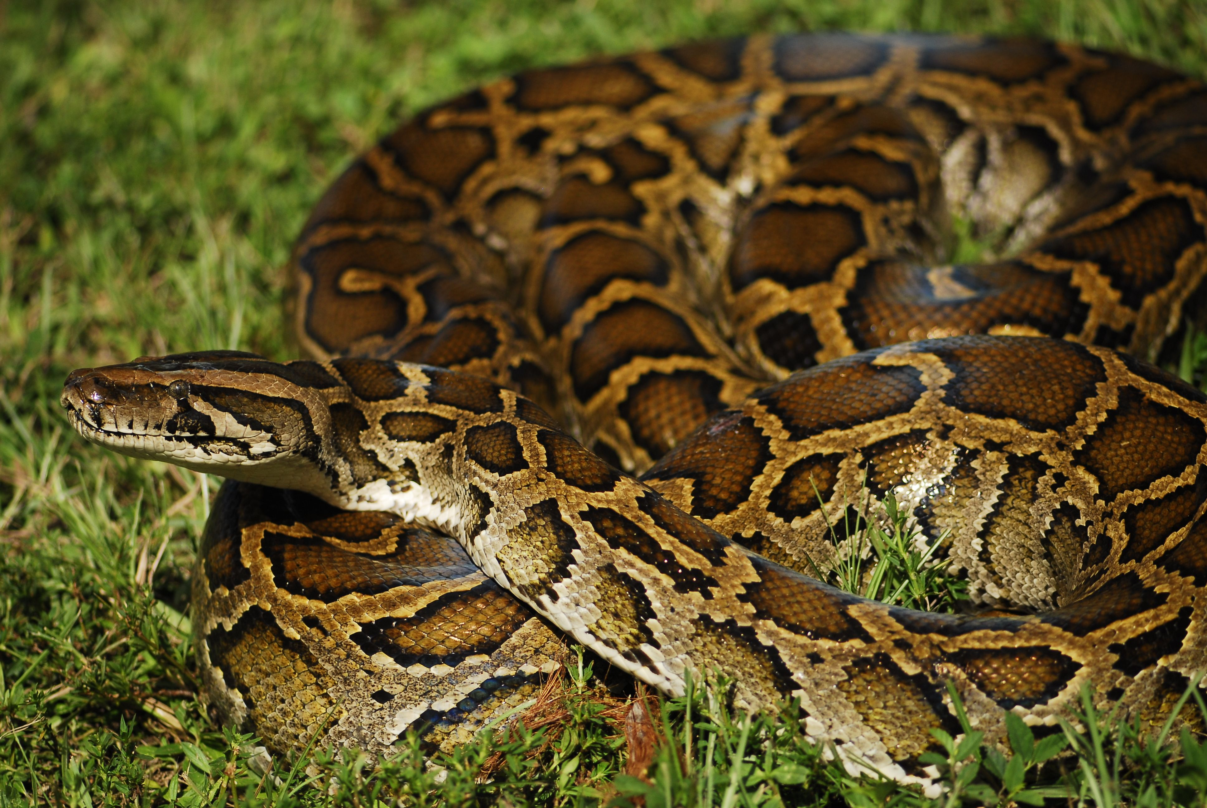 10++ Most dangerous animals in florida ideas