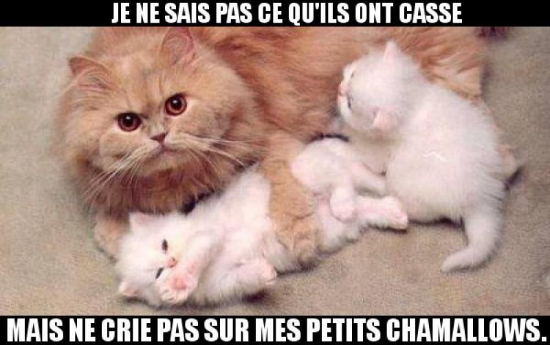 Chatons - Image drôle - Animaux | Humour animaux, Animaux drôles, Animaux mignons
