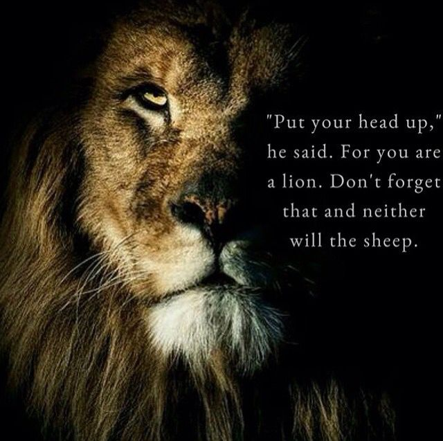 Lion Sheep Quote: Words, Words, Words