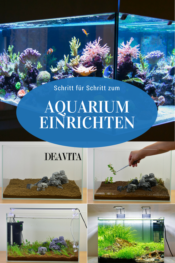 wenn sie selber ein aquarium einrichten wollen dann sind sie bei uns richtig gelandet im. Black Bedroom Furniture Sets. Home Design Ideas
