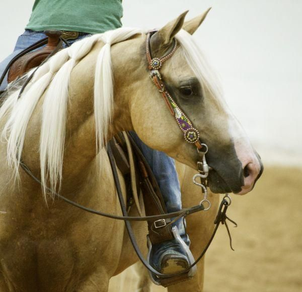 """scarlettjane22:    Shining Gold Dust """"Sparky""""    Found on equestrianlife.com"""