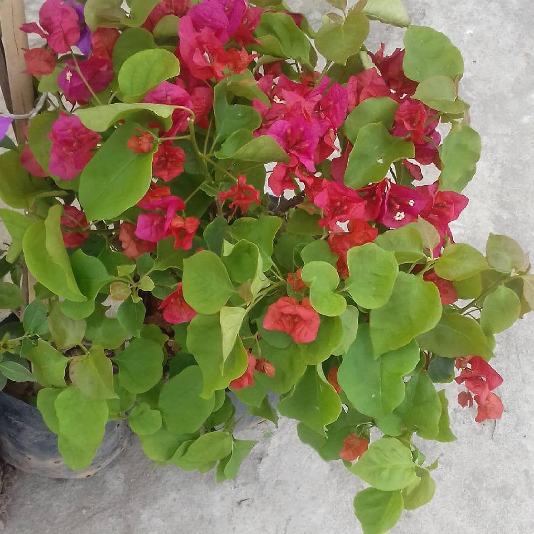 Plantas Flores Nature Plants Garden Naturaleza Suculentas O