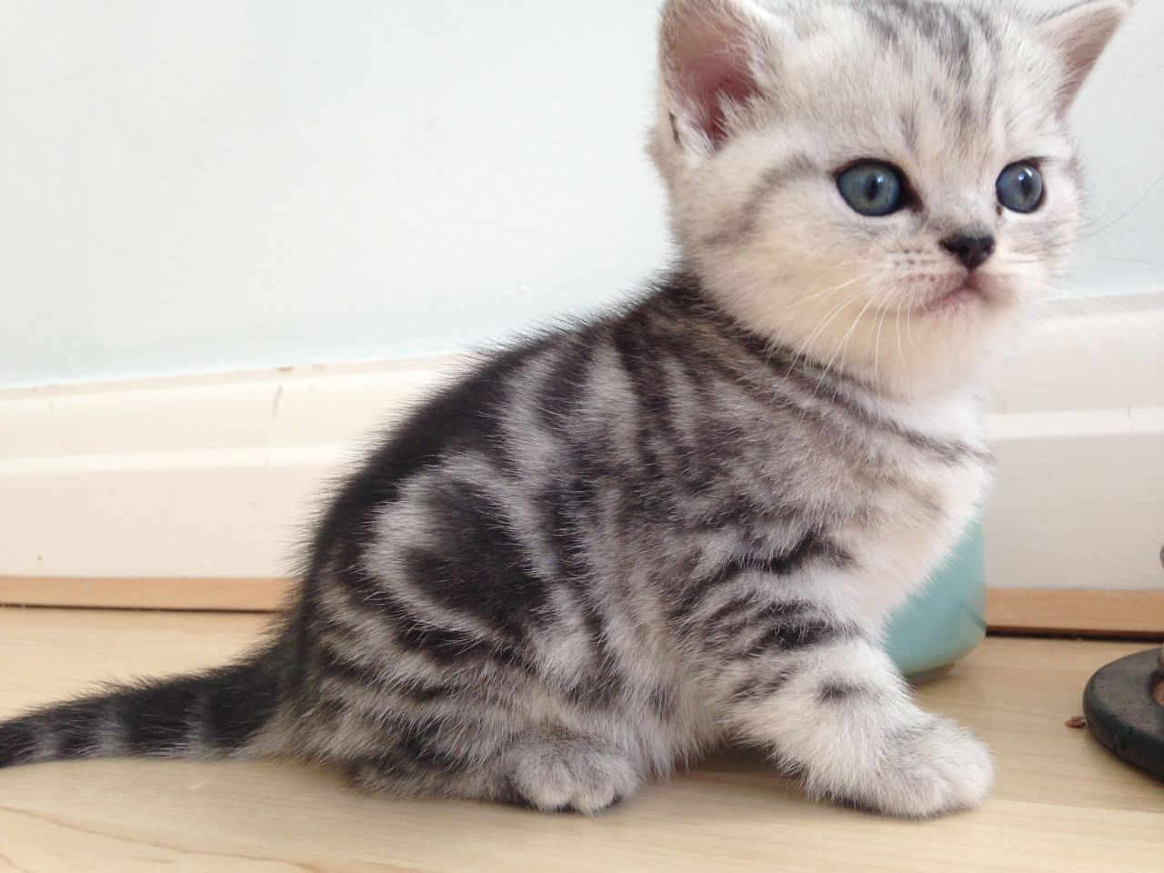 Look at our cute new baby kittens Pinterest