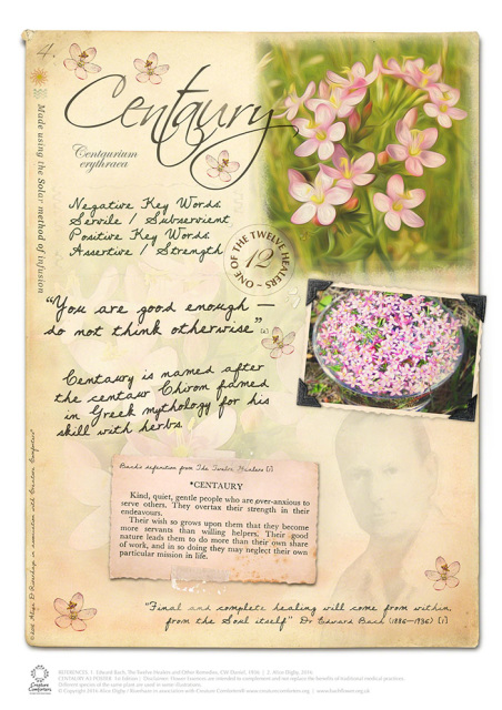 Centaury Bach Flower Essence Stock (With images) Flower
