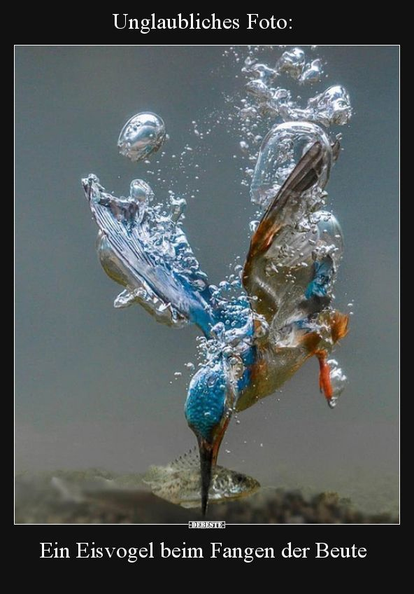 Unglaubliches Foto: Ein Eisvogel fängt die Beute .. | Lustige Bilder, Spray … – Kelly Blog