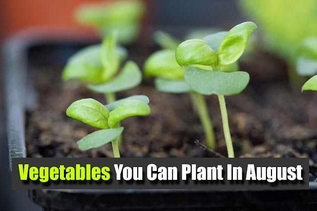 Vegetables You Can Plant In August When To Plant 400 x 300