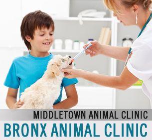 Bronx Animal Clinic Pet Clinic Pet Medications Pet Meds