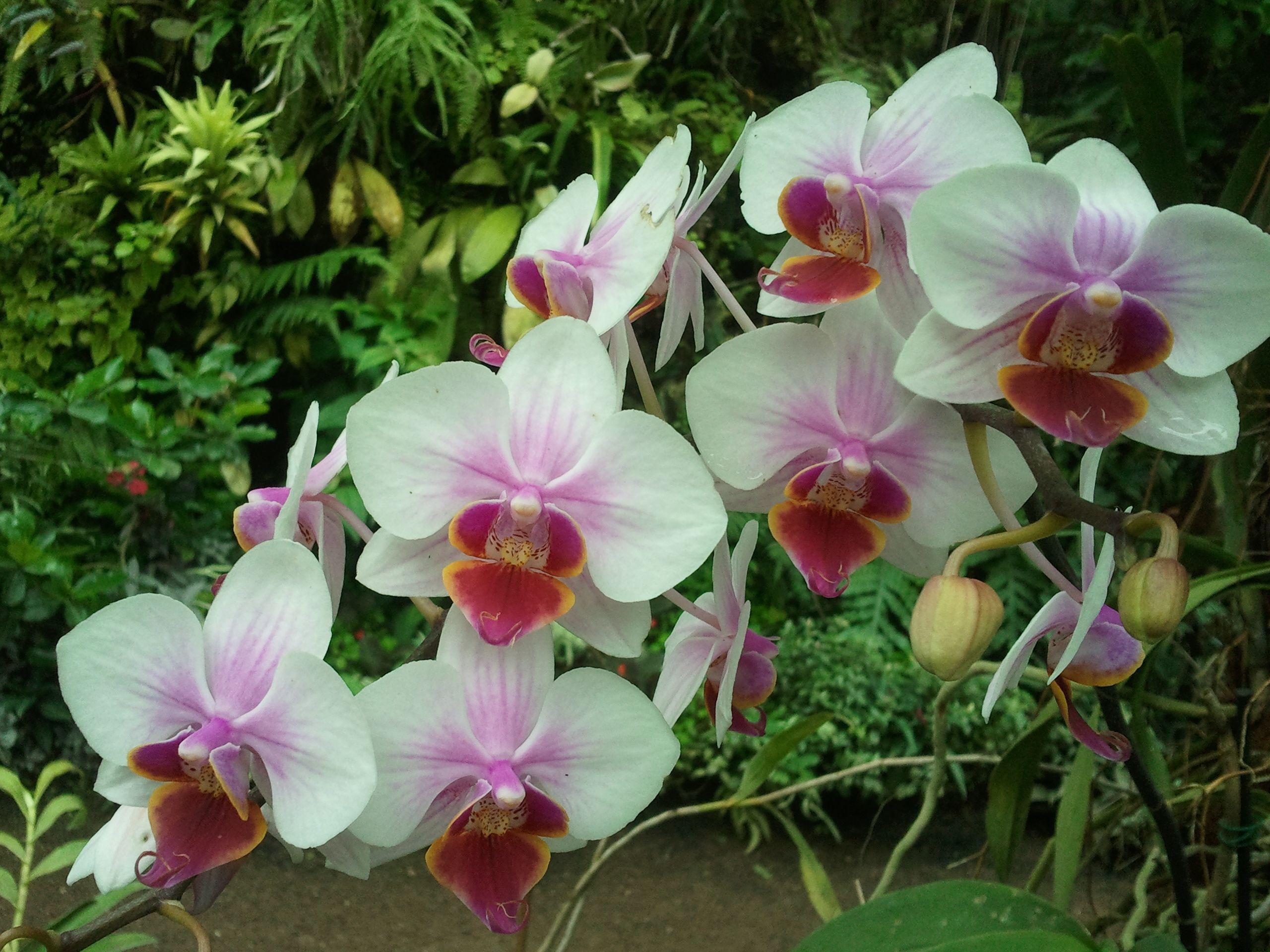 orquideas fotos jpg , Buscar con Google