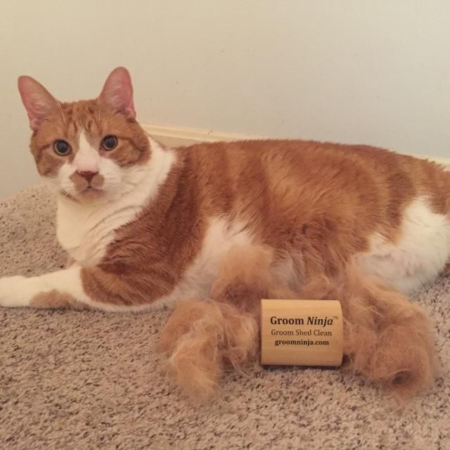 Taz Loves The Groom Ninja Pets Pinterest Pets Dogs And Cats