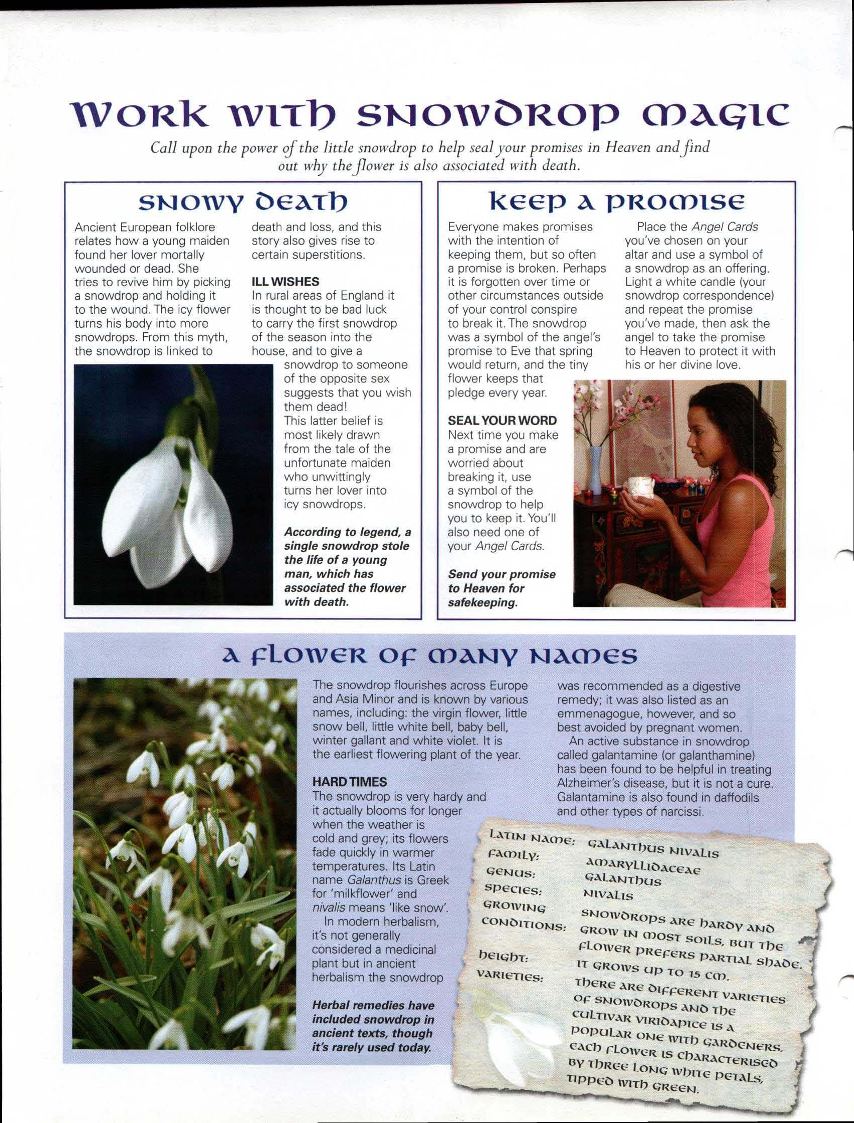 Work with Snowdrop Magick   My Magickal Path   Wiccan crafts