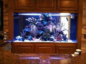 #aquariums #aquarium #gallon #giant #water #saltGiant Aquariums: 300 GALLON SALT WATER AQUARIUM - $3...