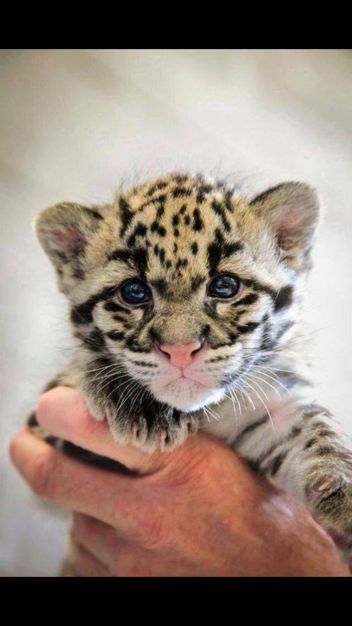 The 37 Cutest Baby Animal Photos Of 2014 Animales