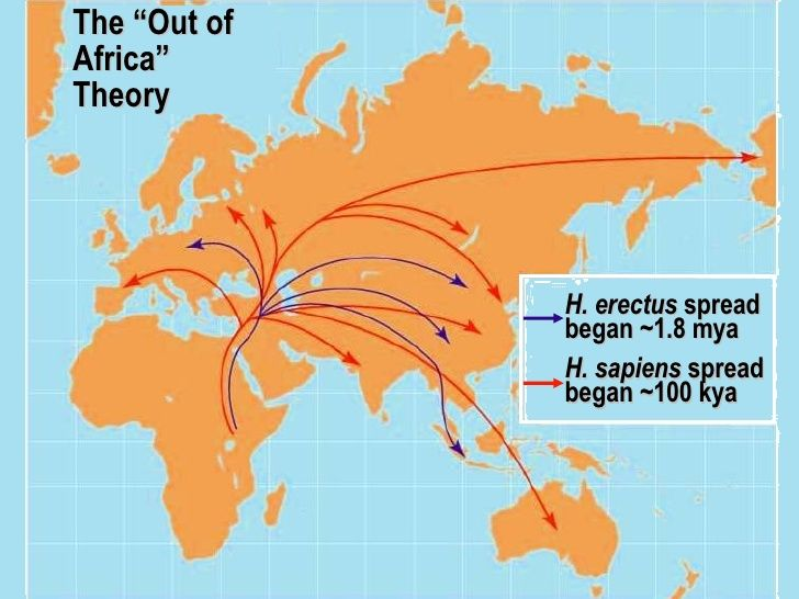 Image Result For Out Of Africa Theory Dna Science Genetics Human