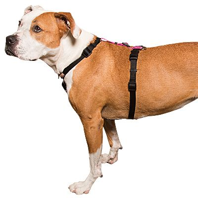 Balance Harness Slip Over The Head Style Dog Harness Dogs Style