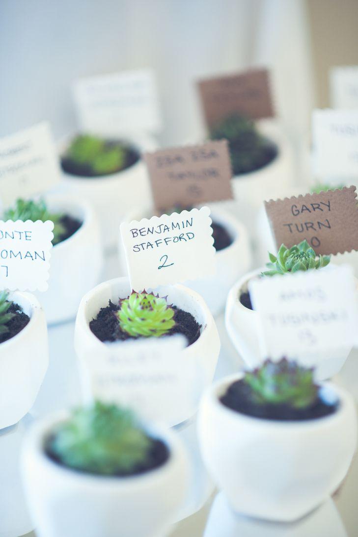 Succulents in White Planter Escort Cards | Escort Cards | Pinterest ...