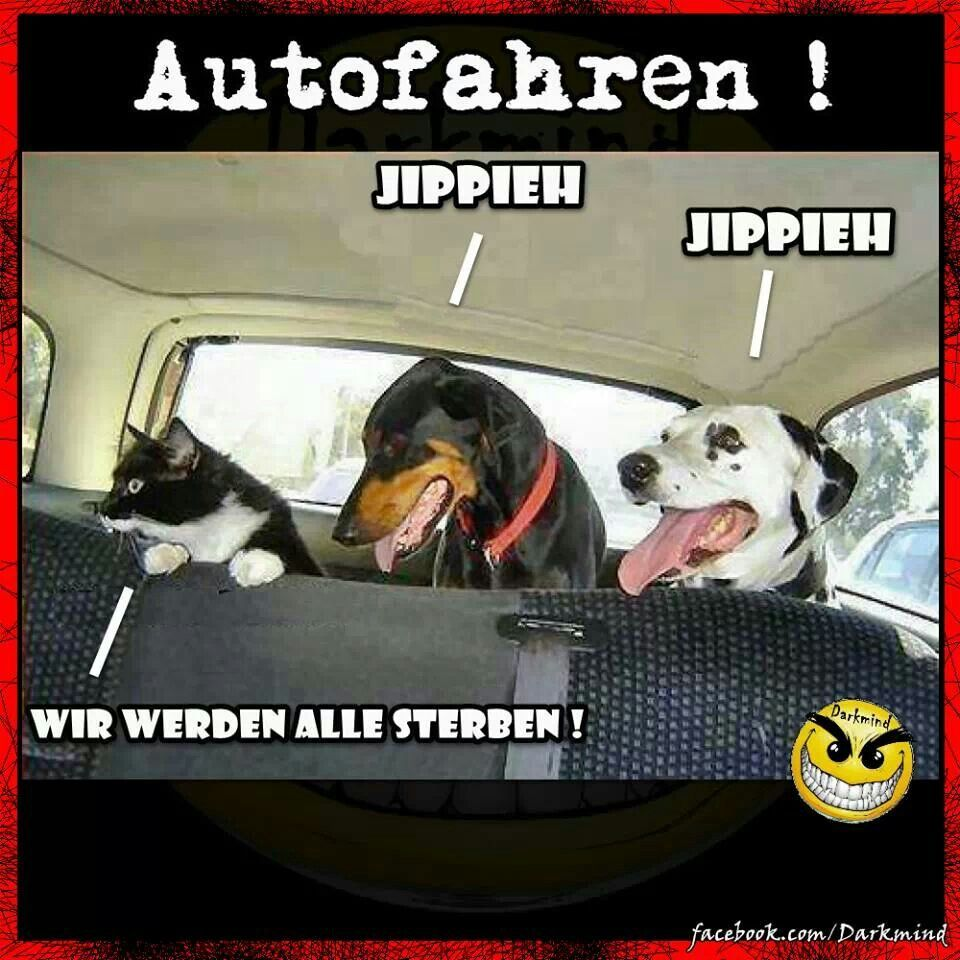 Funny Quotes About Dogs Riding In Cars