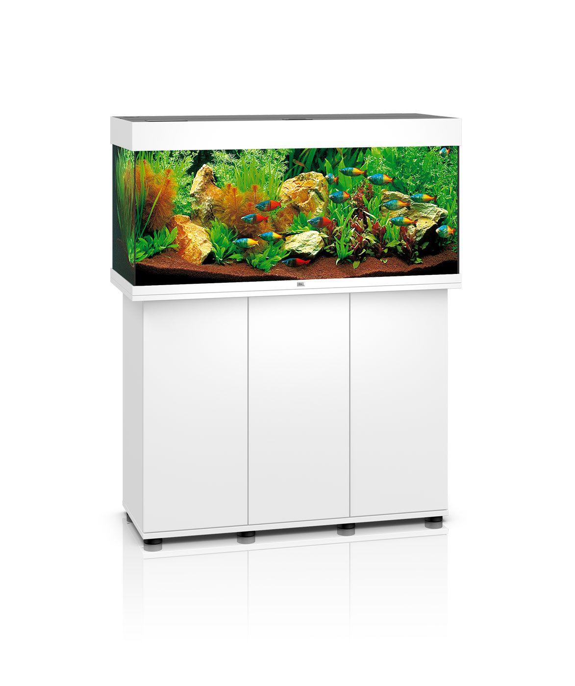 JUWEL® Aquarium Rio 300 white (mit Bildern) Goldfisch