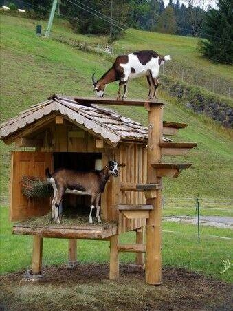 Goat Playground Ideas Pallet Playhouse