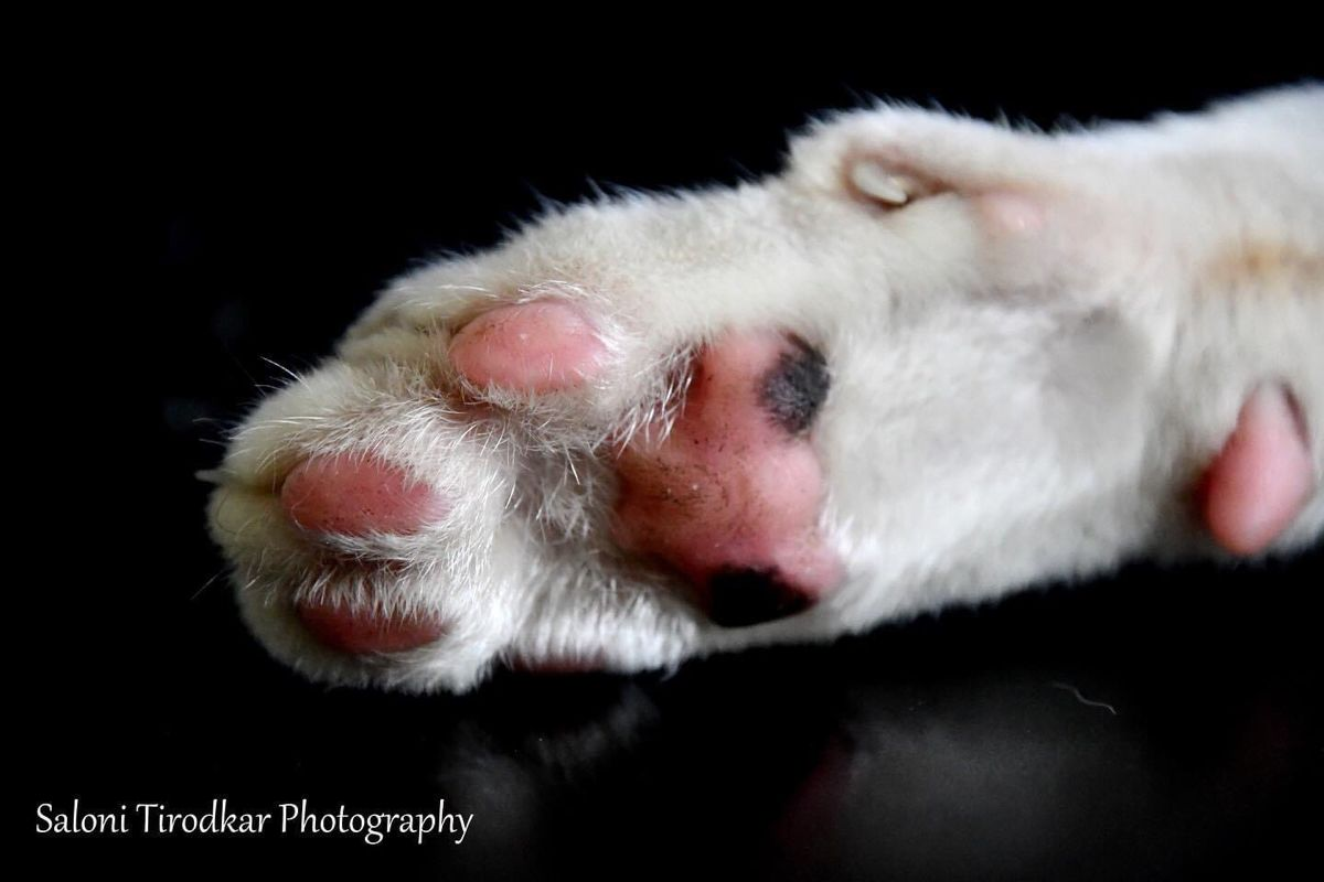 Pawse everything, and have a great weekend!  #paw #paws #pawprints #toebeans #cat #cats #catsofinstagram #kitten #kittens #kittensofinstagram #pet #pets #petsofinstagram #petphotography #petphotographer  #photography #photographer #weekend #weekendvibes #salonitirodkarphotography #likeit #likephoto #follow