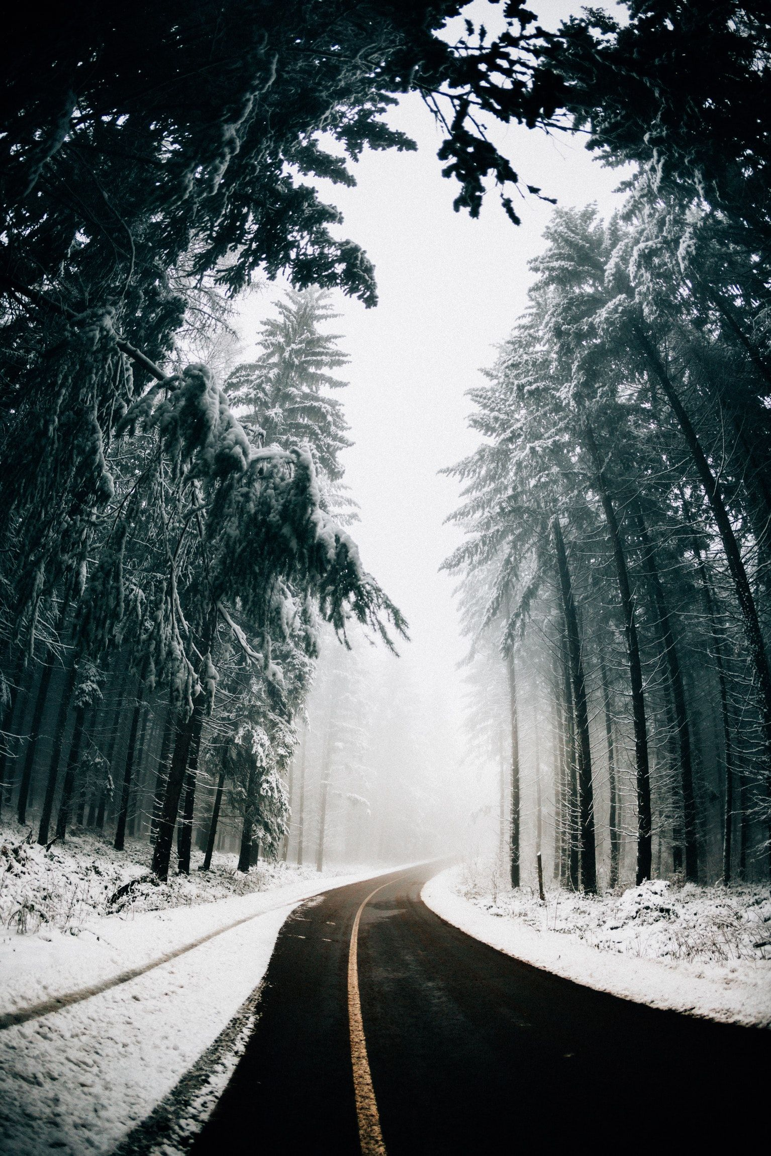 Asphalt Road In Between Trees Covered With Snow Winter Scenery Winter Photography Nature Photography Hd wallpaper snow winter road asphalt