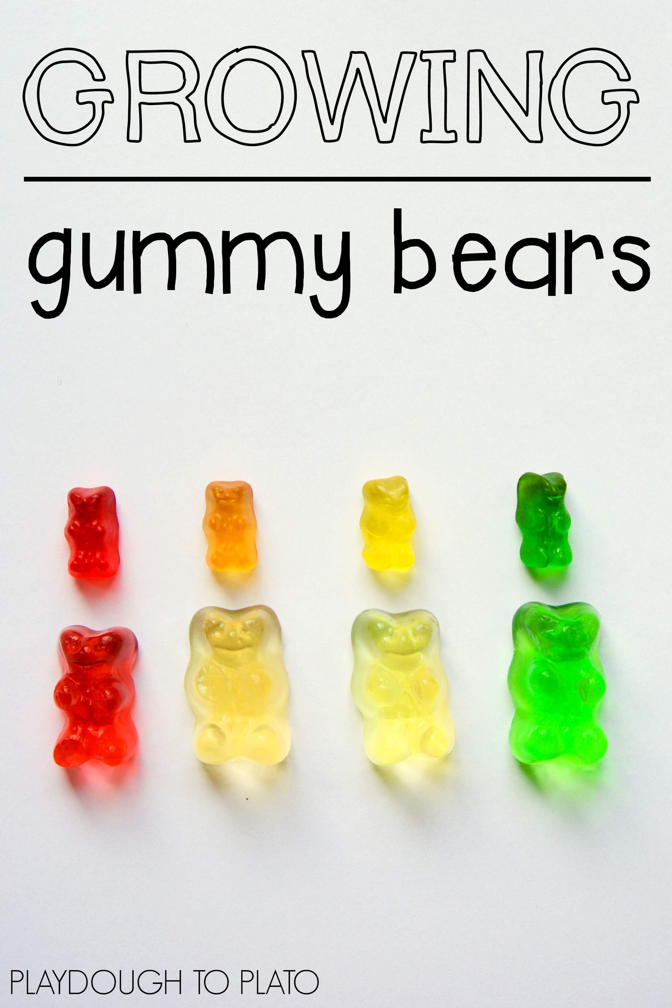 Growing Gummy Bear Science | Easy science, Science fair and Science ...