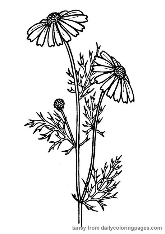 Realistic Flower Coloring Pages Flower drawing, Flower