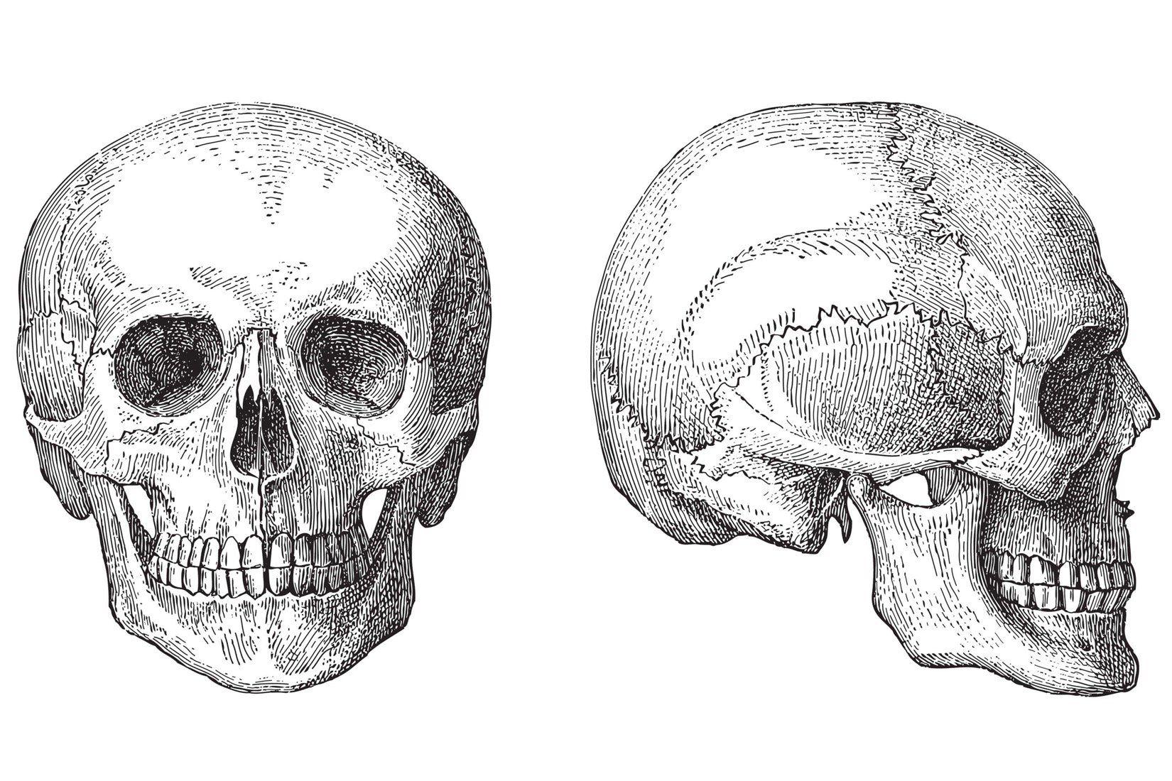 Illustrierte Totenköpfe bemalte Tapete Tapeten