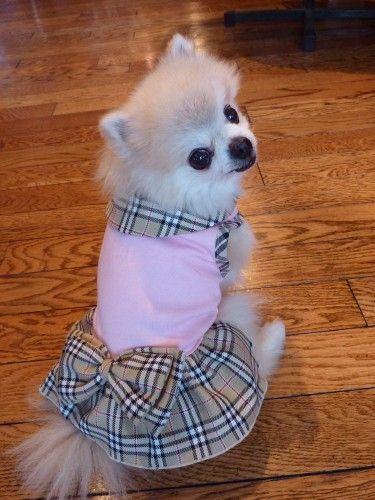 Burberry Dog Dress I Dog Clothes Girl Dog Clothes Designer Dog Clothes