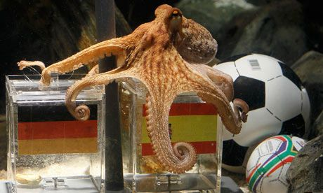 Paul The Octopus Finds Psychic Successor As Pavlik Tips For Euro 2012 Paul The Octopus Octopus Cats That Dont Shed