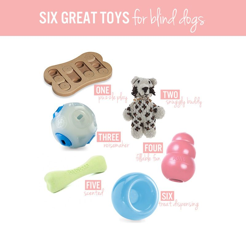 Six Great Toys For Blind Dogs Dog Toys Dogs Puppies